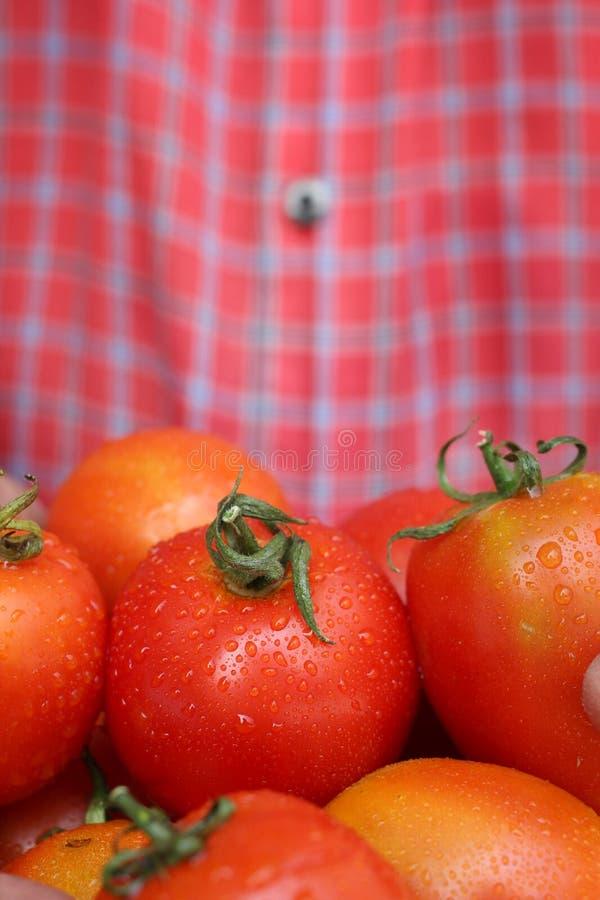 Download Nya tomater arkivfoto. Bild av banta, anstrykning, rått - 37347678
