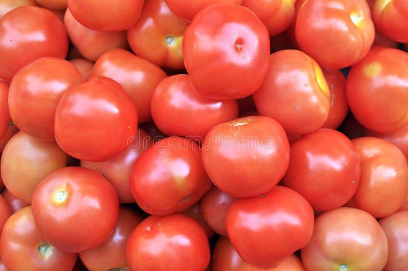 nya tomater arkivfoto
