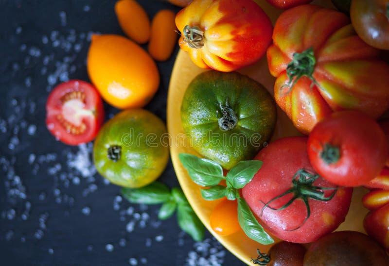 nya tomater för basilika royaltyfria bilder