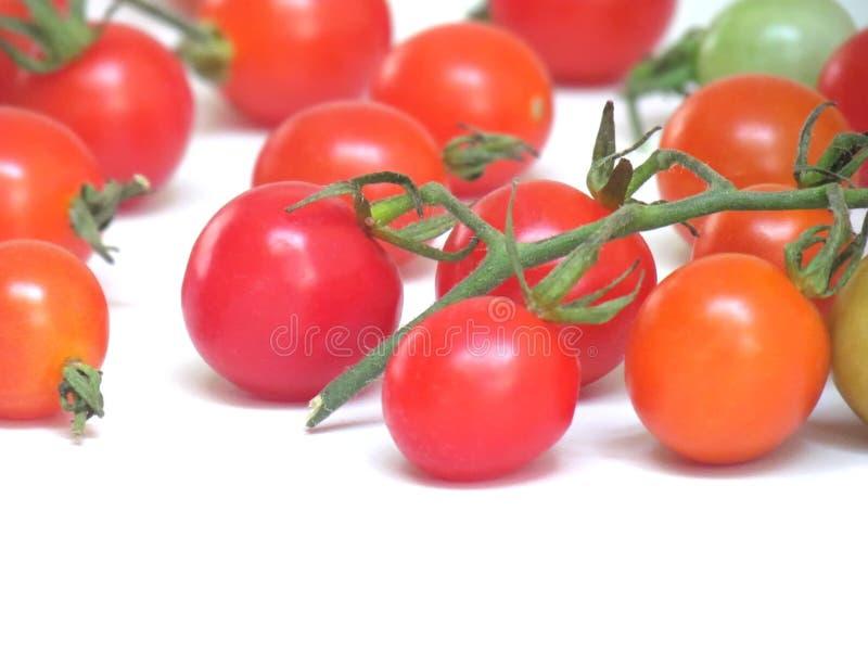 Nya tomater i en variation av färger royaltyfria bilder