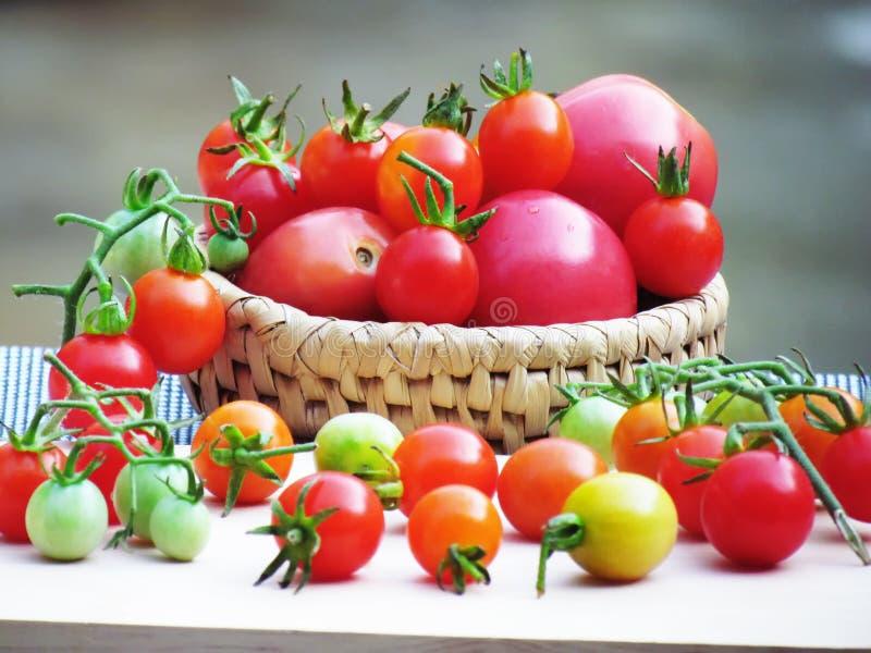 Nya tomater i en variation av färger och format som tillsammans sätts i en korg och förläggas på ett träbräde royaltyfri bild