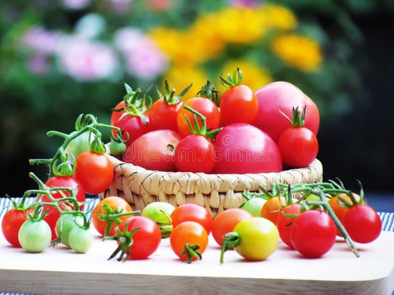 Nya tomater i en variation av färger och format som tillsammans sätts i en korg och förläggas på ett träbräde på tabellen arkivfoto