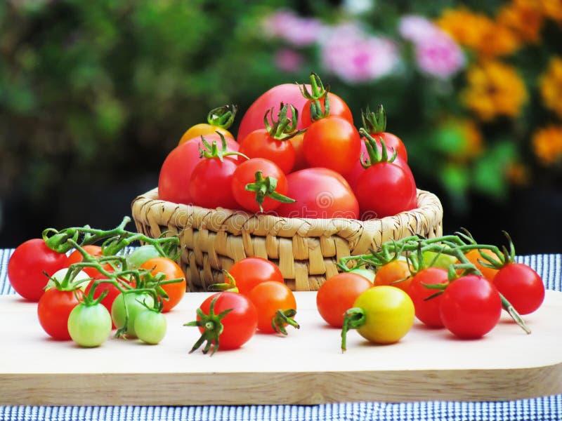 Nya tomater i en variation av färger och format som tillsammans sätts i en korg och förläggas på ett träbräde på tabellen royaltyfri bild