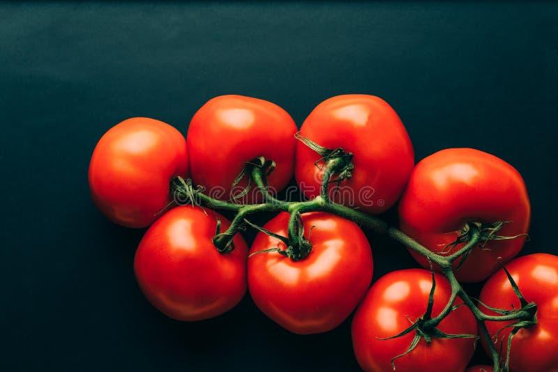 Nya tomater på mörk bakgrund fotografering för bildbyråer
