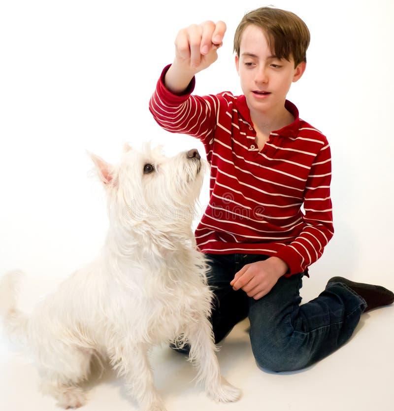 nya undervisande trick för hund arkivfoto