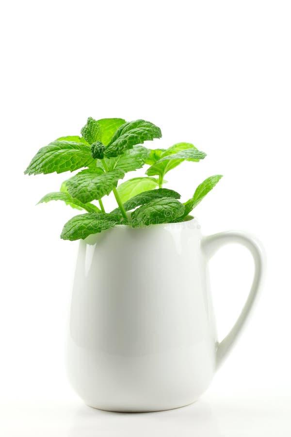 nya växt- leaves rånar royaltyfria foton