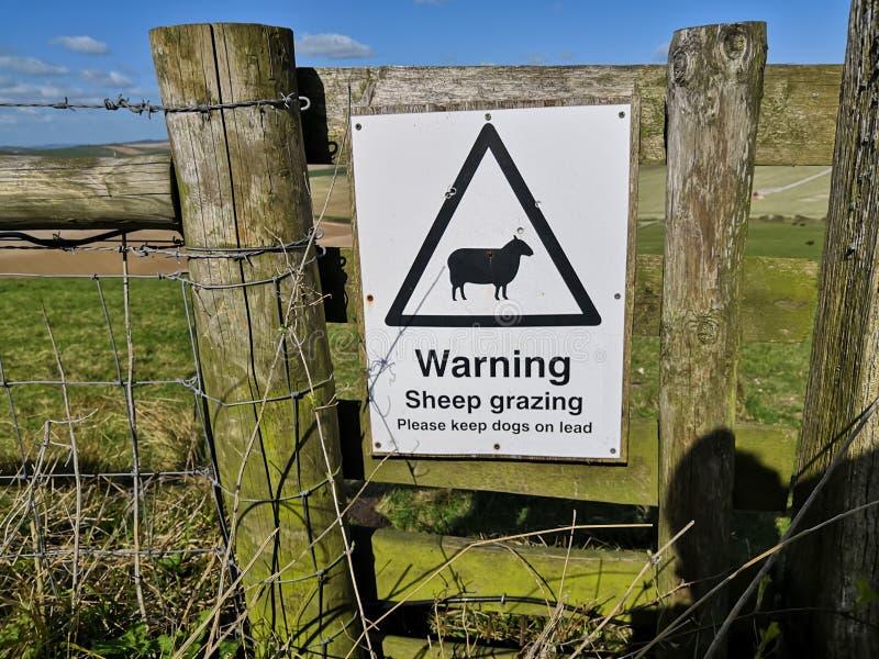 Nya varnande får som betar tecknet Detta skyddar att beta fårlamm och råder hundägare i Sussex kullar att sätta djur på koppeln arkivfoton