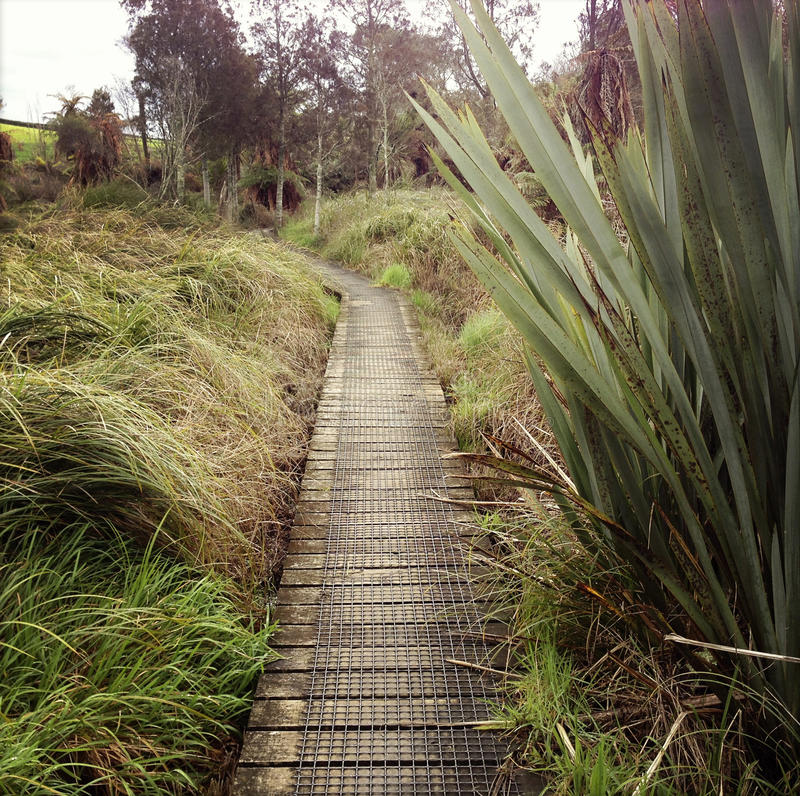 Nya Zeeland arkivbild