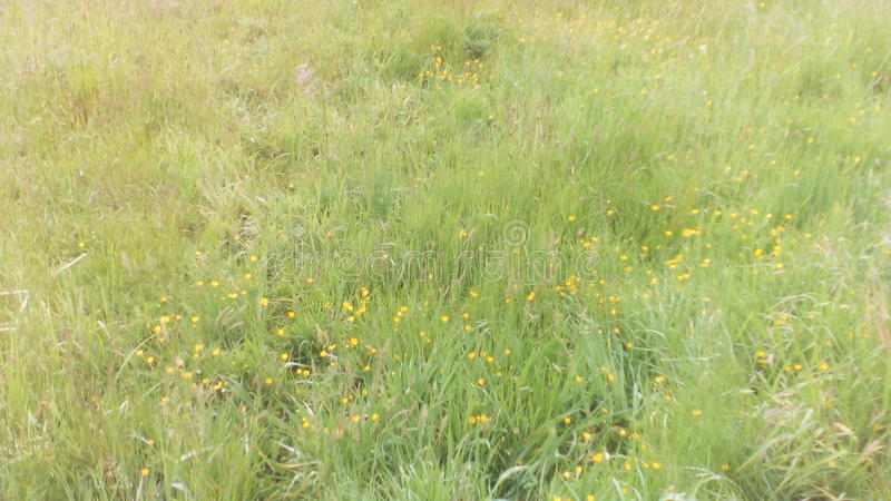 Nya Zeeland gräsplan royaltyfri bild
