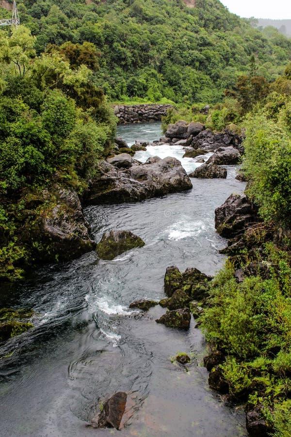 Nya Zeeland i sommar royaltyfria foton