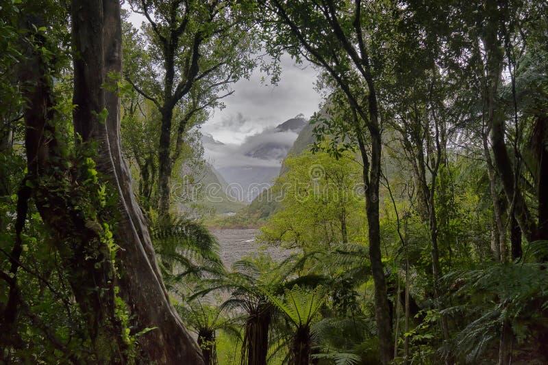 Nya Zeeland väg för sikt för regnskogFranz Josef glaciär royaltyfria foton