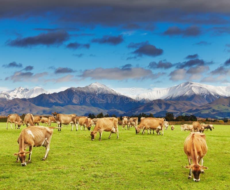 Nya Zeelands landskap royaltyfri fotografi