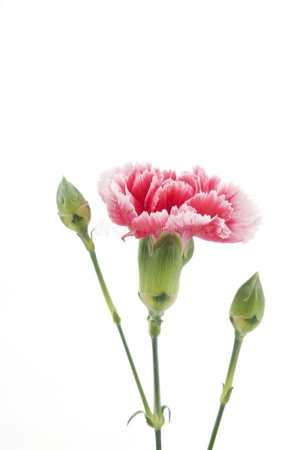 nyanserad blomma arkivbilder
