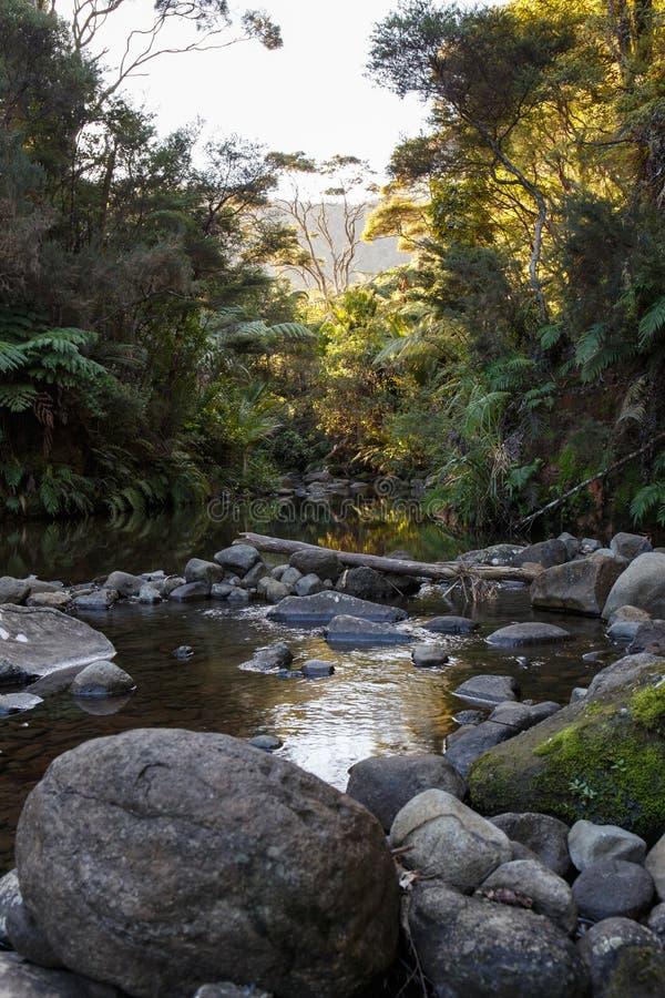 Nyazeeländsk flod som kör till och med skog arkivfoto