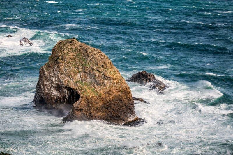 Nyazeeländsk kust royaltyfria bilder