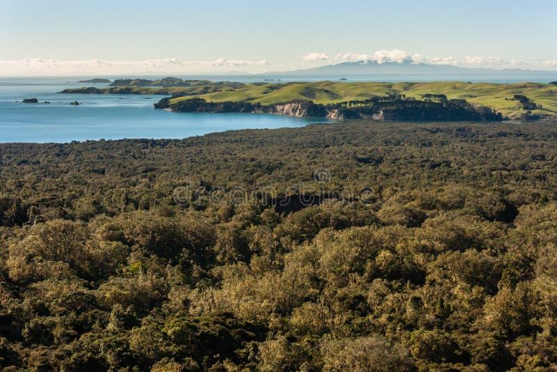 Nyazeeländsk kustlinje med den tropiska rainforesten arkivbilder