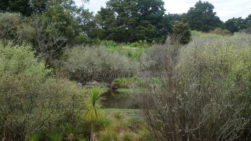 Nyazeeländska naturliga våtmarker royaltyfria bilder