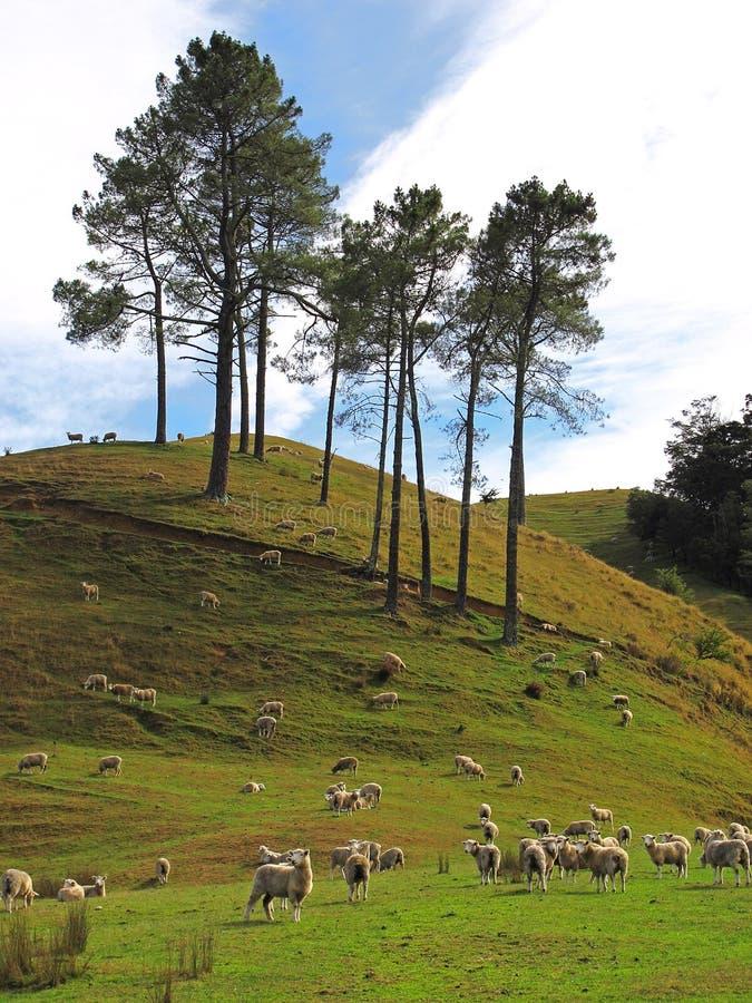 Nyazeeländskt landskap royaltyfri foto