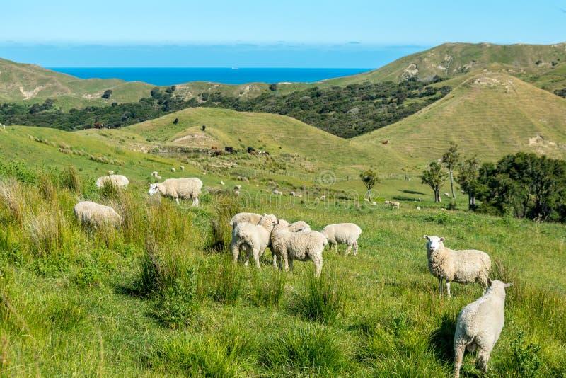 Nyazeeländskt landskap royaltyfri fotografi