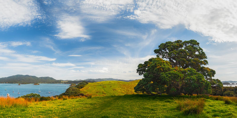 Nyazeeländskt landskap med det Pohutukawa trädet på fjärden av öar royaltyfri fotografi