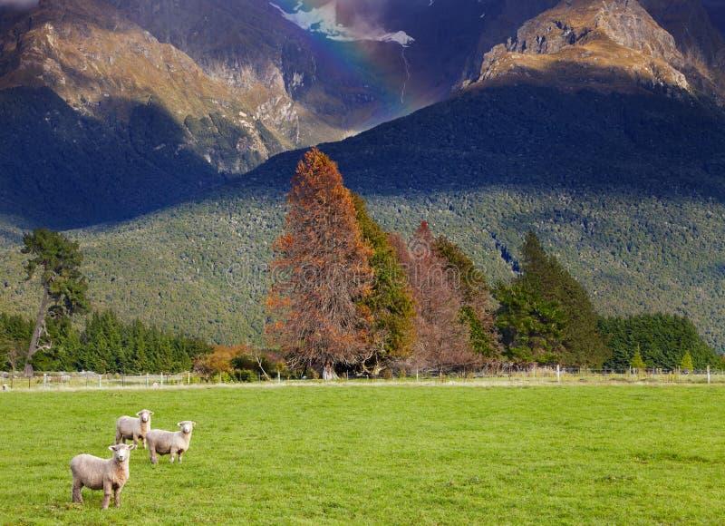 Nyazeeländskt landskap, södra ö royaltyfria bilder