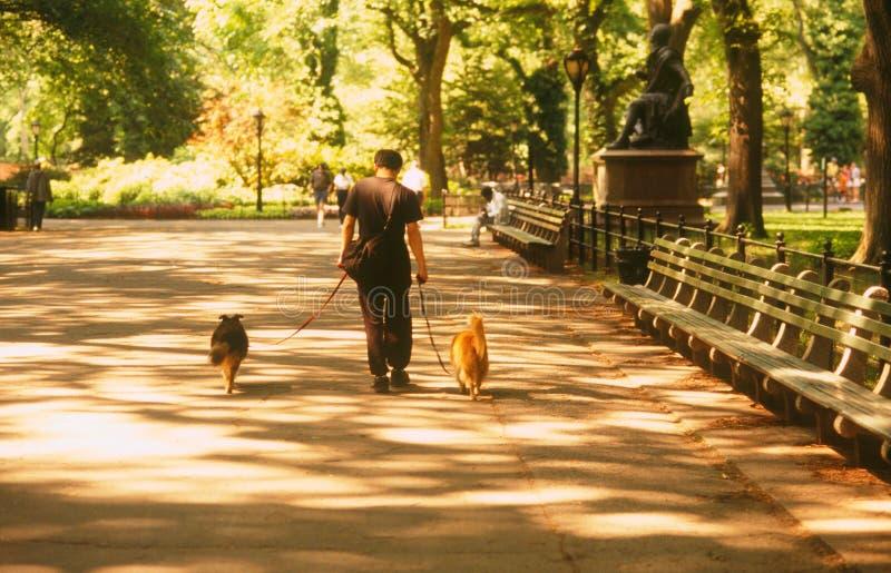 Nyc de Central Park image stock