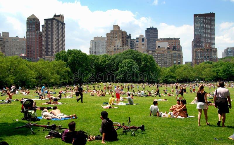 NYC: De weide van Schapen in Central Park stock afbeeldingen