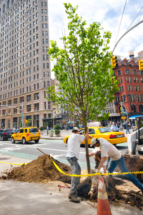 NYC Tree Planting. NEW YORK CITY - APR. 20: Workers plant tree in NYC Union Square, Flatiron district on April 20, 2012. MillionTreesNYC plans on planting a royalty free stock photography