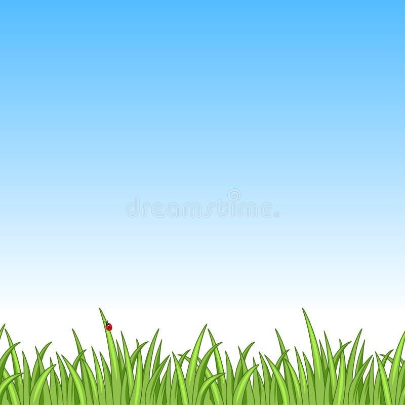 Nyckelpiga i gräs vektor illustrationer