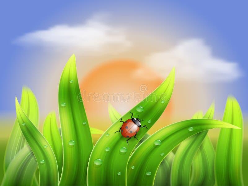 Nyckelpiga och gräs på en bakgrundssolnedgång vektor illustrationer