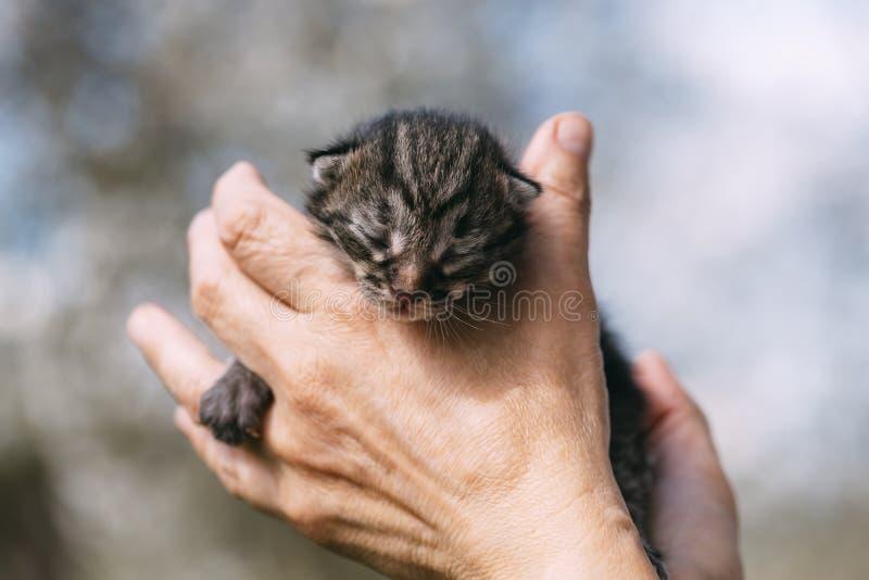 Nyfödd kattunge i handoutdors royaltyfri bild