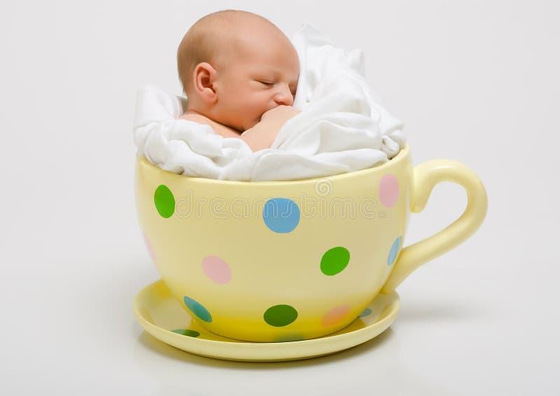 nyfödd prickig yellow för kopp arkivfoton