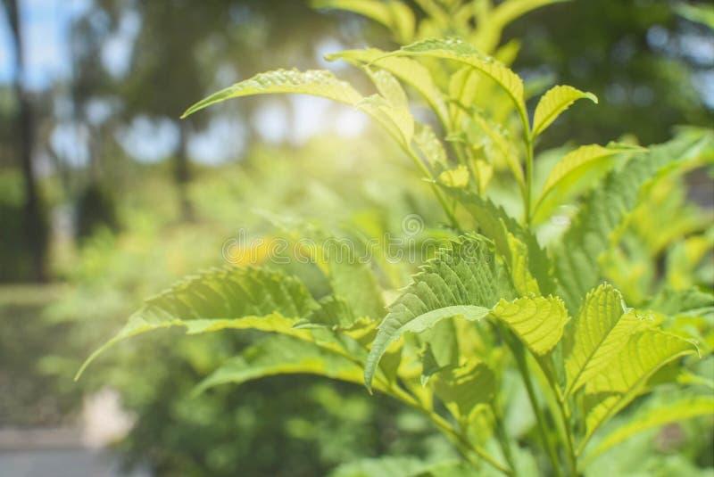 Nyfödda träd i ljus - gräsplan arkivfoton