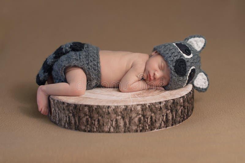 Nyfött behandla som ett barn pojken som bär en tvättbjörndräkt fotografering för bildbyråer