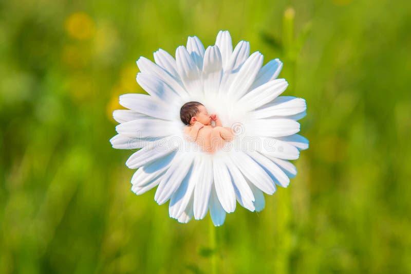 Nyfött behandla som ett barn sömnar i blomma för vit tusensköna arkivbild