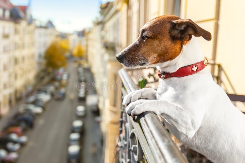 Nyfiken hållande ögonen på hund arkivbilder