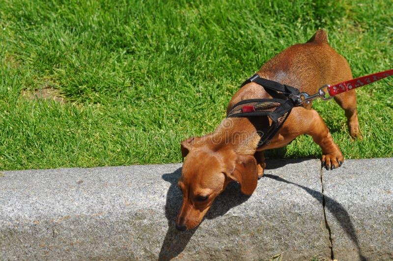 nyfiken hund arkivfoton