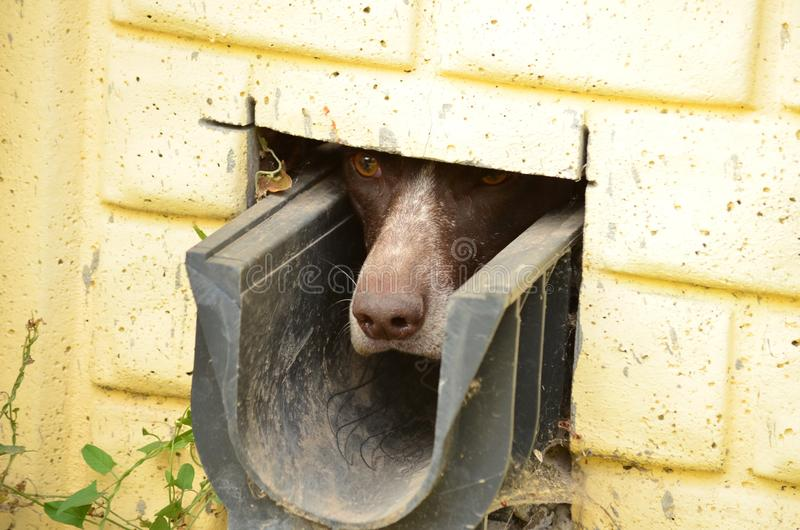 nyfiken hund royaltyfri bild