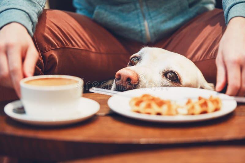 Nyfiken hund i kafét royaltyfri fotografi