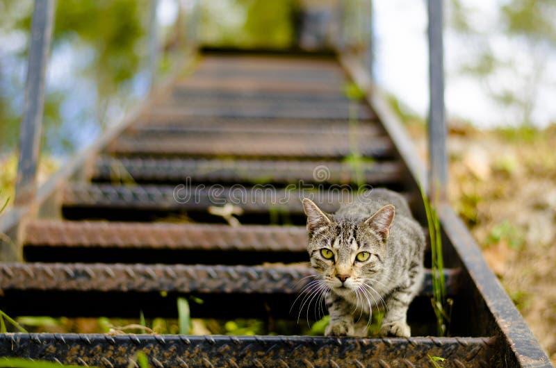 nyfiken katt royaltyfri foto