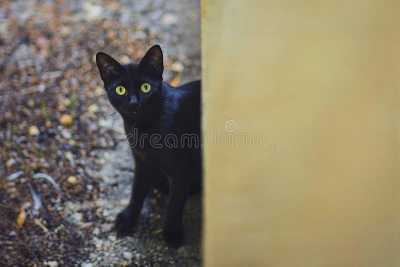 Nyfiken katt i trädgården i en regnig höstdag arkivfoto