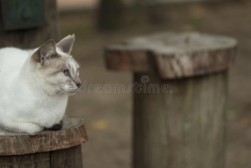 Nyfiken katt sitted stirra och observation härliga ögon royaltyfria foton