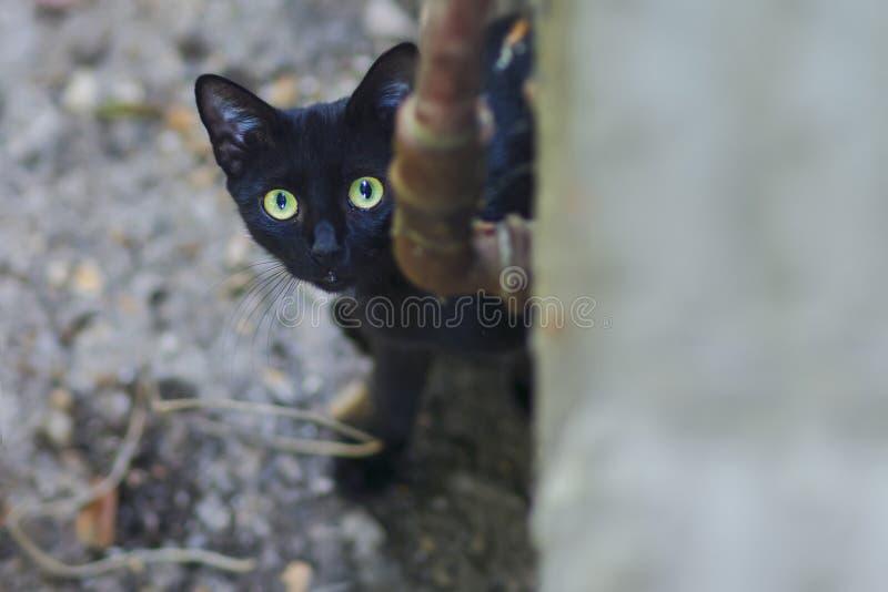 Nyfiken katt som smyga sig i trädgården arkivbild