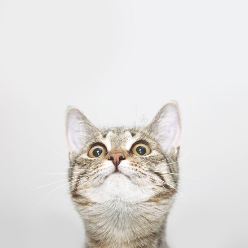 Nyfiken kattframsida som ser upp royaltyfria bilder