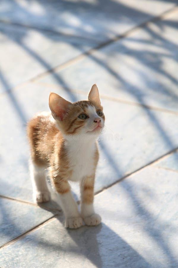 nyfiket gullig kattunge som ser rött uppåtriktat arkivfoto