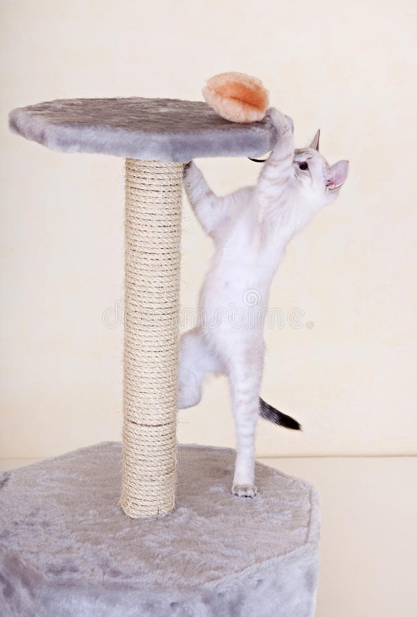 nyfiket leka för kattunge arkivfoto