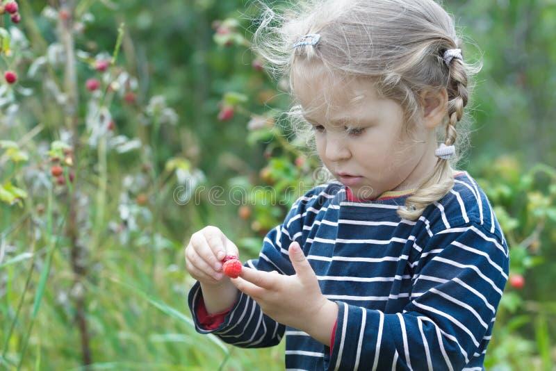 Nyfikna två år gammal blond flicka som väljer det röda trädgårds- hallonet, bär frukt royaltyfri bild