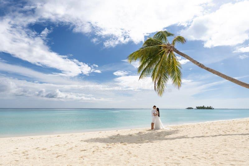 Nygifta personer kysser under en palmträd på en ursnygg strand med vitt sand- och turkosvatten royaltyfri foto