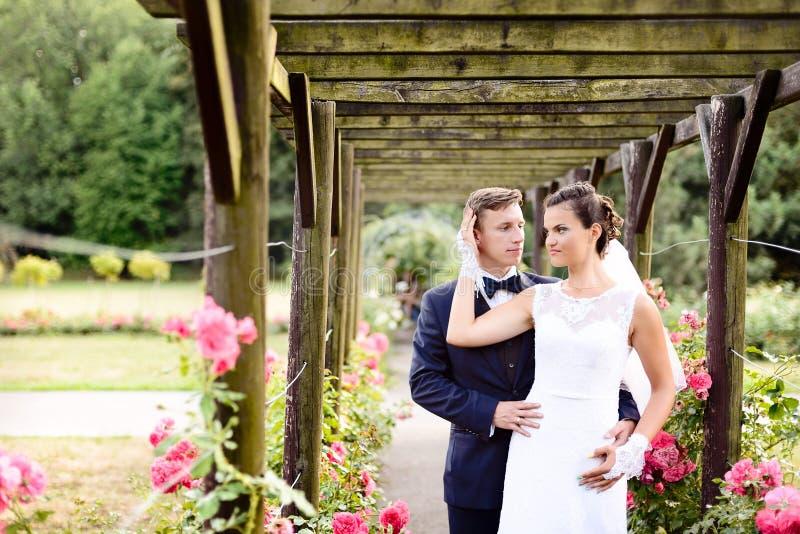 Nygifta personer parkerar in rosariumen bredvid härliga rosa rosor arkivfoton