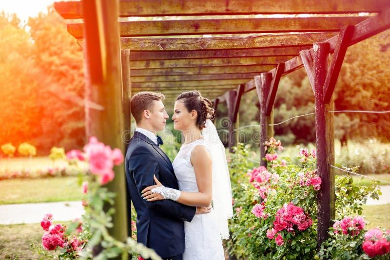 Nygifta personer parkerar in rosariumen bredvid härliga rosa rosor arkivbilder